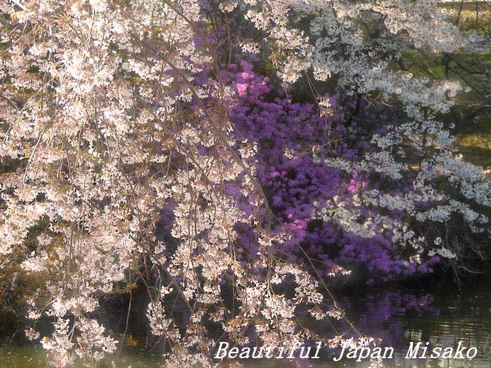 春がゆく・゚☆、・:`☆・・゚・゚☆馬見塚公園_c0067206_21181968.jpg