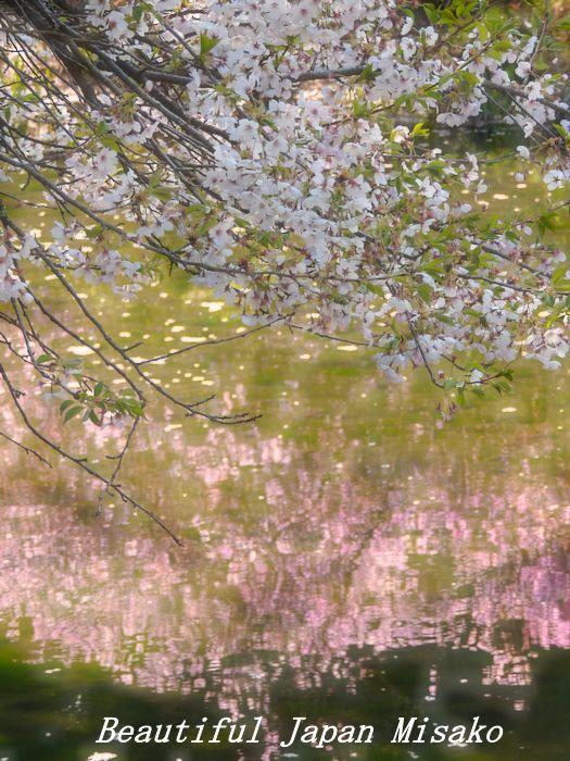 春がゆく・゚☆、・:`☆・・゚・゚☆馬見塚公園_c0067206_21182158.jpg
