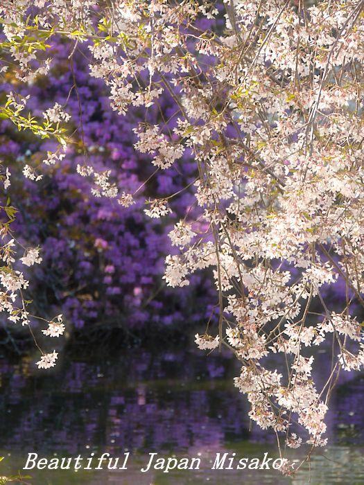 春がゆく・゚☆、・:`☆・・゚・゚☆馬見塚公園_c0067206_21183056.jpg