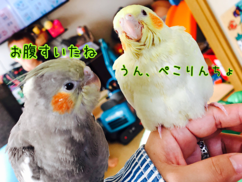 梅雨の日のドラえもんと春休みの鳥たち。_b0349211_09310324.jpg