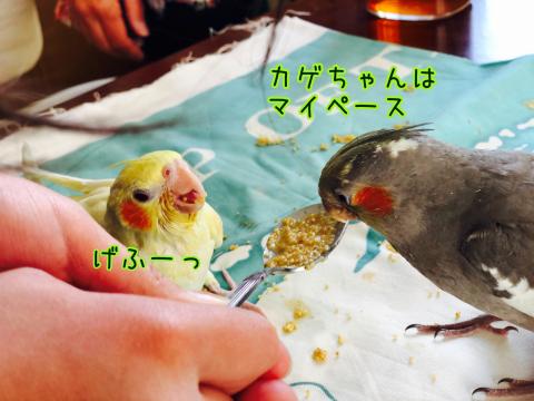 梅雨の日のドラえもんと春休みの鳥たち。_b0349211_09315394.jpg