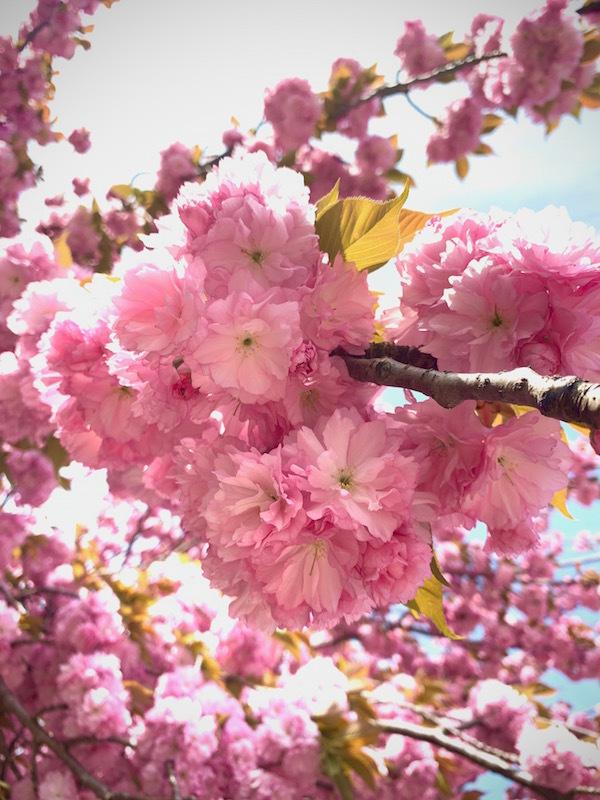 bloom_b0172633_15490882.jpg