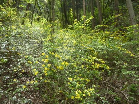 日本一低いアルプスに挑む『小野アルプス縦走』_c0218841_10210949.jpg