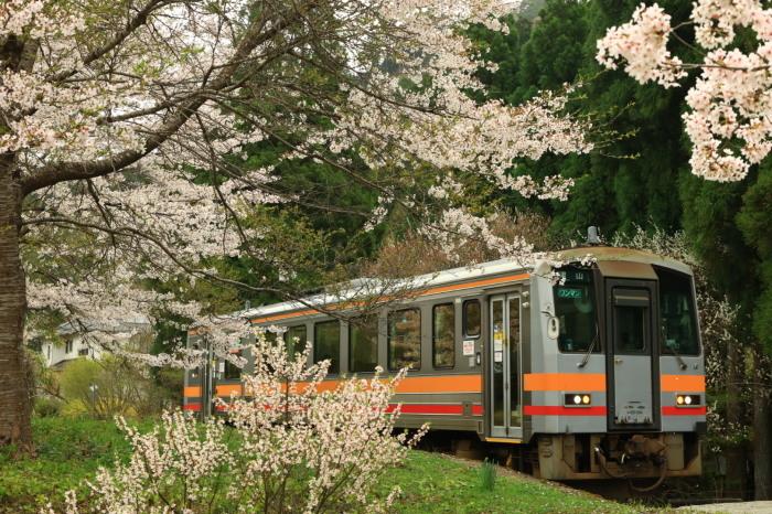 桜の花道に登場_f0371447_10412189.jpg