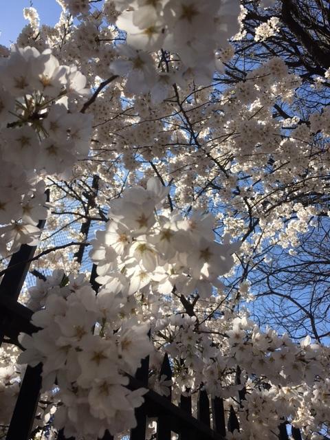 Spring is here in NY   April 2021_b0069951_07515340.jpg