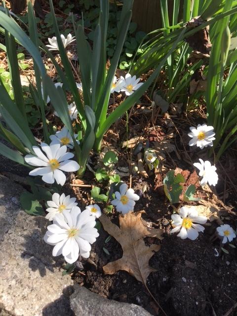 Spring is here in NY   April 2021_b0069951_07515350.jpg
