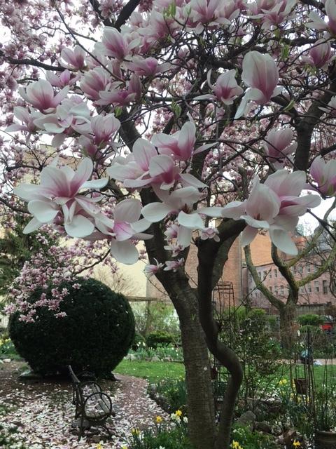 Spring is here in NY   April 2021_b0069951_07515480.jpg