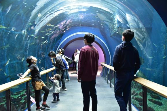 琵琶湖博物館 その―2_e0164563_11254011.jpg