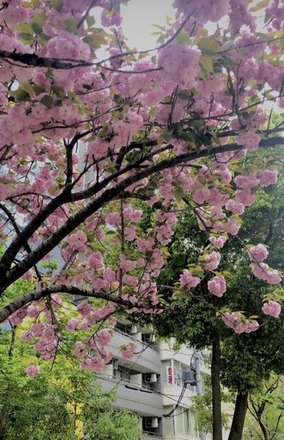 桜_f0202682_13241891.jpeg