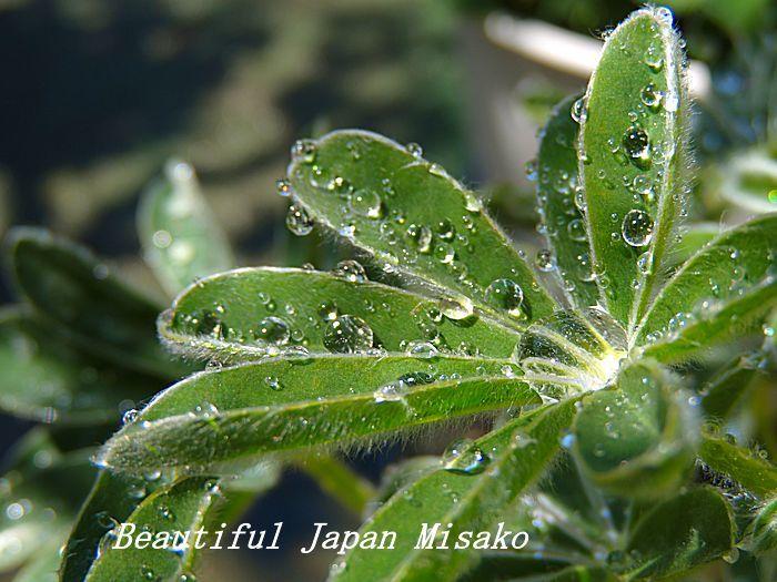 すべての苗を植え終わった~♡・゚☆、・:`☆・・゚・゚☆_c0067206_08000965.jpg