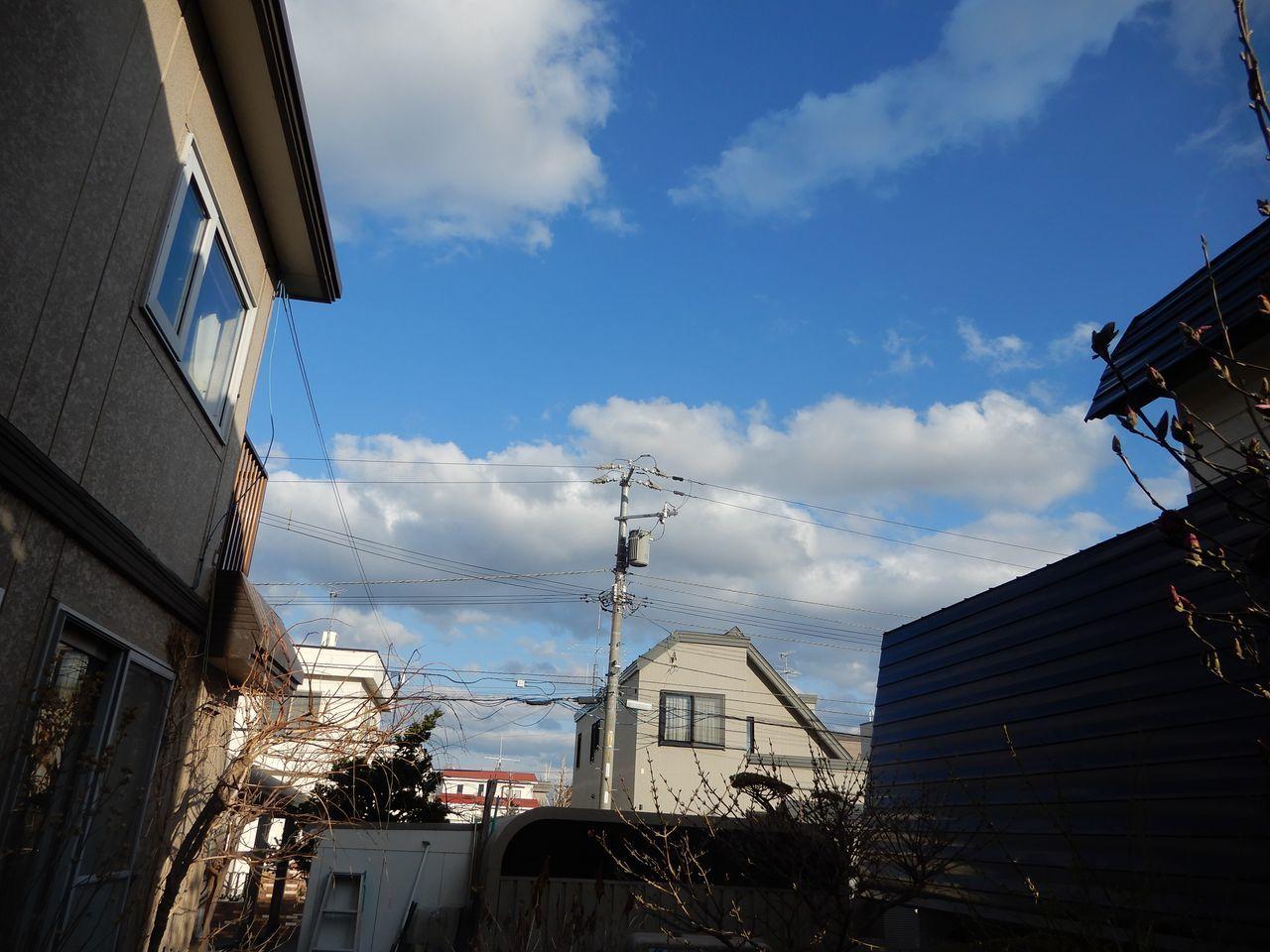 寒さが戻り「キノコの教科書」を読む_c0025115_21091878.jpg