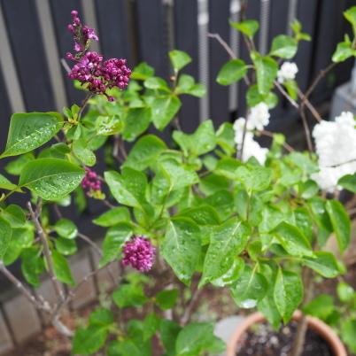 花と緑の季節_b0206421_15142597.jpg