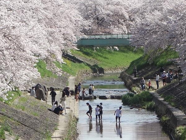 蟻はなぜ桜を運ぶのか。_f0097528_10162522.jpg