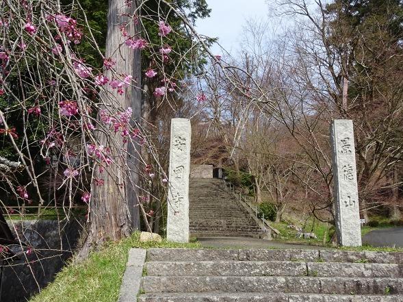 綾部安国寺の枝垂れ桜_b0299042_15225253.jpg