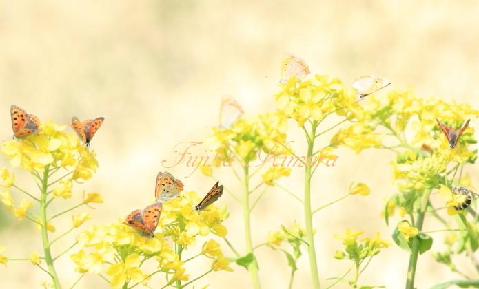 ■■ 利根川に紅の花咲く ■■_c0195662_21283125.jpg