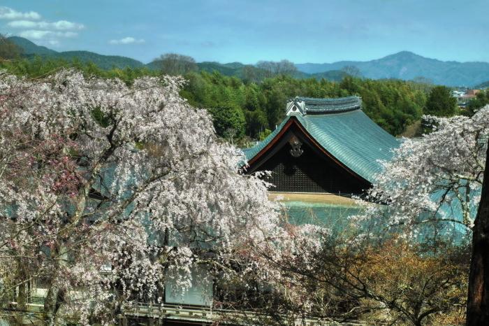 京都 桜 2021_f0021869_00010820.jpg