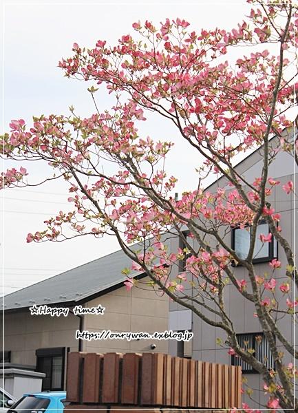 オムライス弁当と庭から・ピンク♪_f0348032_18252795.jpg