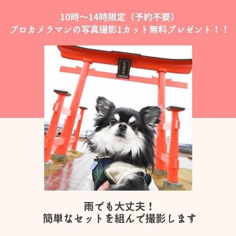 アニマルマーケットミニ*Sakuro*_a0392641_10351935.jpg