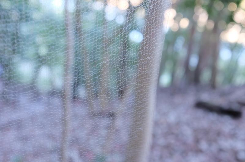 森の展示室を終え、帰ってきました。_c0243045_13013051.jpg