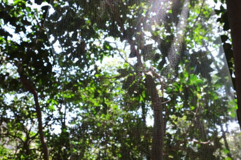 森の展示室を終え、帰ってきました。_c0243045_13031440.jpg