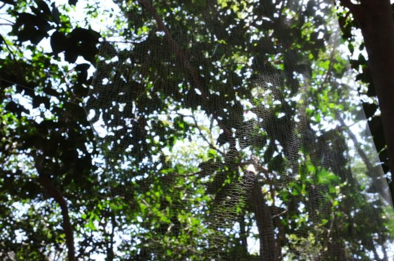 森の展示室を終え、帰ってきました。_c0243045_13031630.jpg