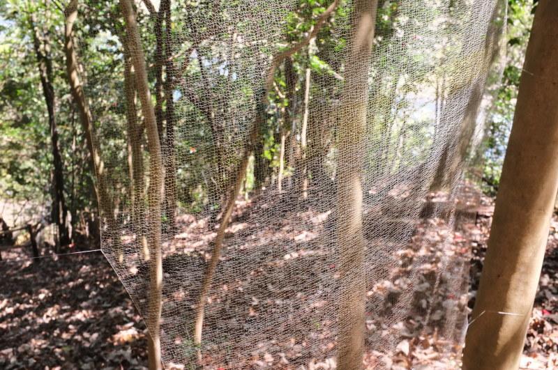 森の展示室を終え、帰ってきました。_c0243045_13090060.jpg