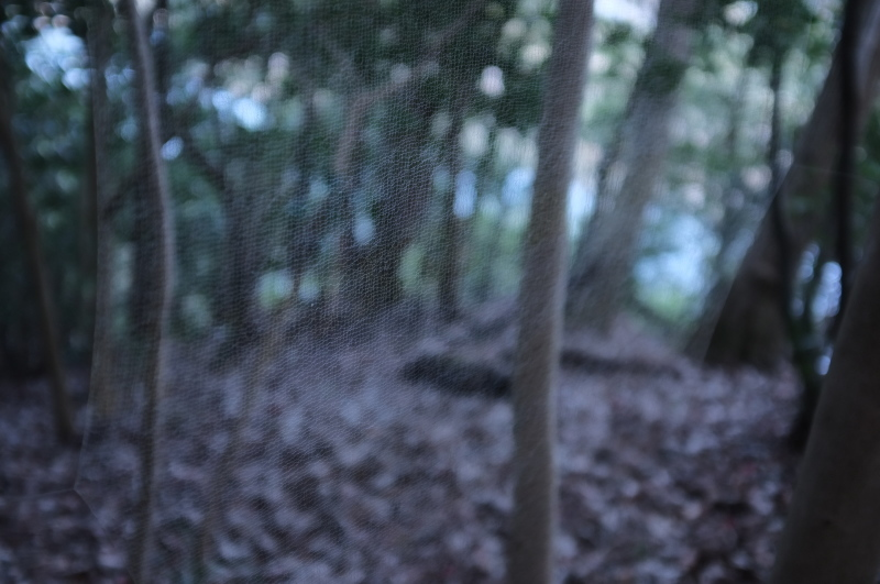 森の展示室を終え、帰ってきました。_c0243045_13104687.jpg