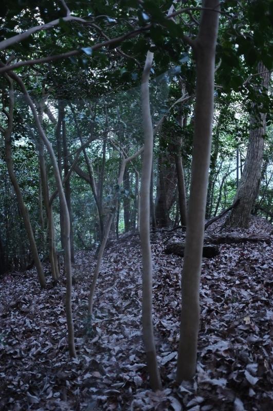 森の展示室を終え、帰ってきました。_c0243045_13112196.jpg