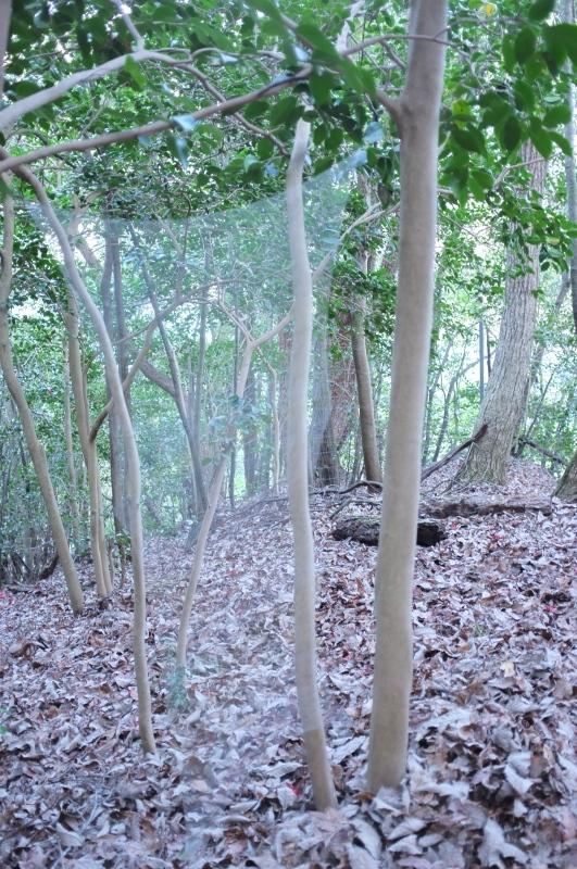 森の展示室を終え、帰ってきました。_c0243045_13112758.jpg