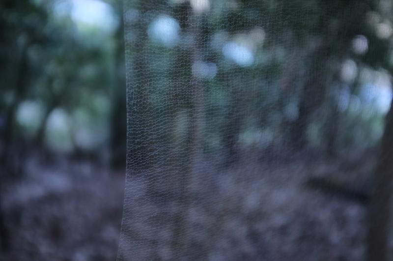 森の展示室を終え、帰ってきました。_c0243045_13125667.jpg