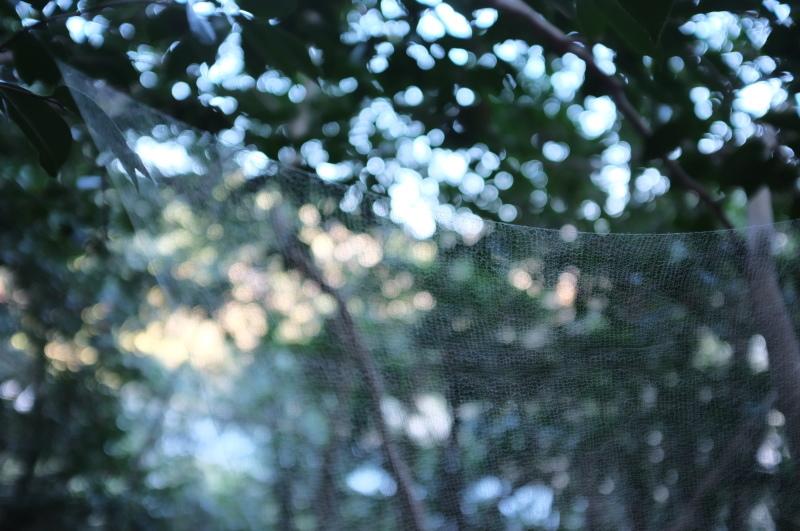 森の展示室を終え、帰ってきました。_c0243045_13130075.jpg