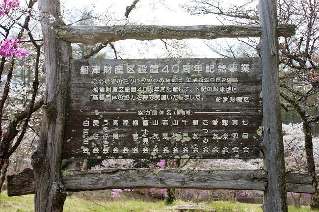 富士桜の開花_d0153860_16504517.jpg