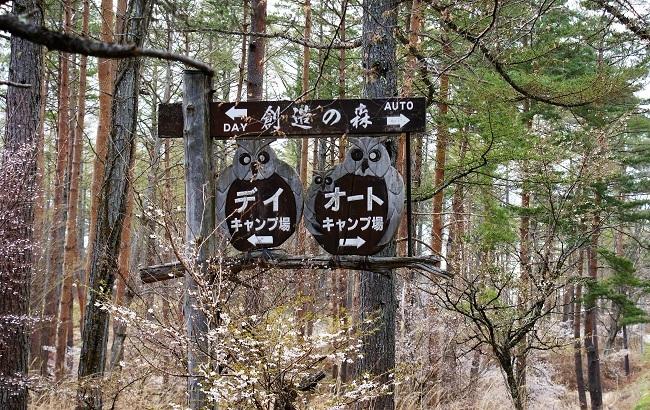 富士桜の開花_d0153860_16510599.jpg