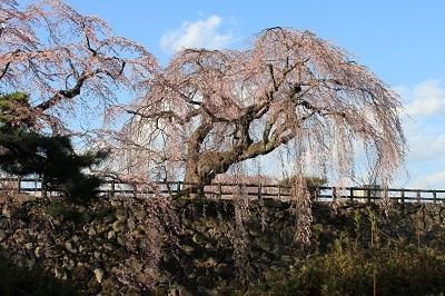 弘前公園_2021.04.15撮影_d0131668_19342421.jpg