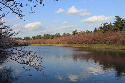 弘前公園_2021.04.15撮影_d0131668_19344326.jpg