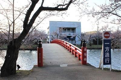 弘前公園_2021.04.15撮影_d0131668_19373651.jpg