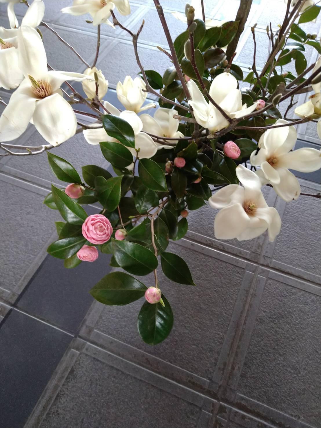 木蓮の香り_c0165824_22194398.jpg