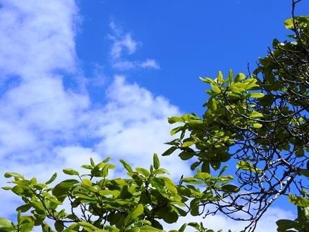 心躍る青空です、でも・・・_a0123836_10503649.jpg