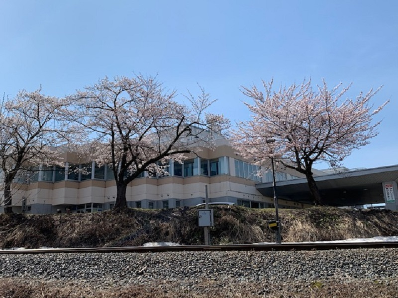 桜が咲き始めました_e0341538_10330423.jpg