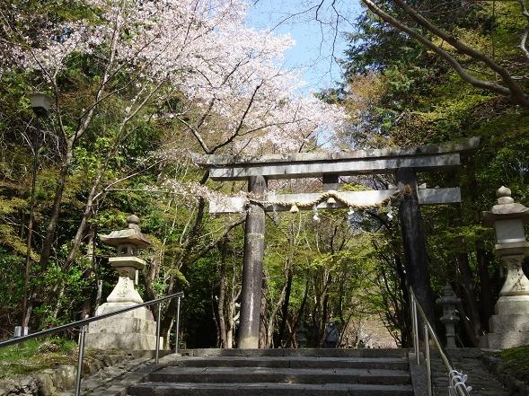大原野神社・幻の桜「千眼桜」_b0299042_19321644.jpg
