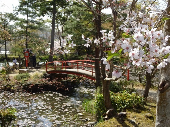 大原野神社・幻の桜「千眼桜」_b0299042_19344124.jpg