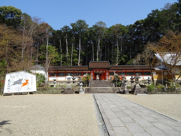 大原野神社・幻の桜「千眼桜」_b0299042_19355431.jpg