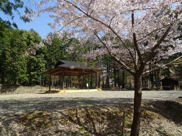 大原野神社・幻の桜「千眼桜」_b0299042_19360318.jpg
