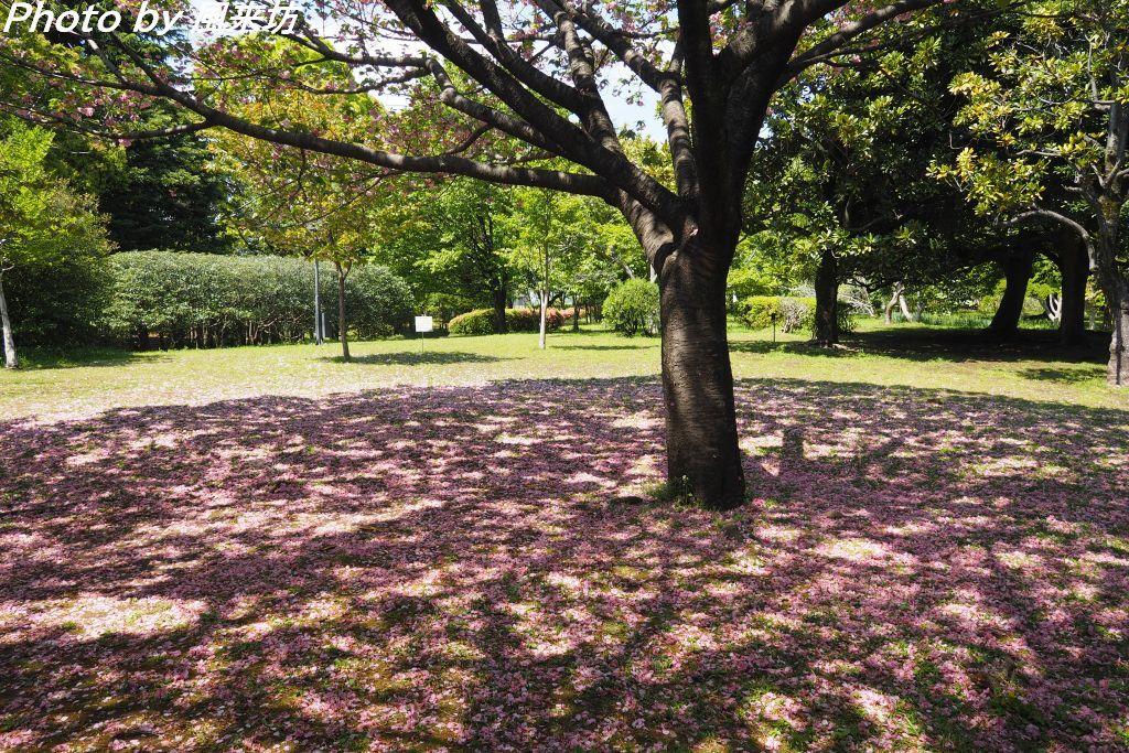 北の丸公園で花散歩_d0358854_20422857.jpg