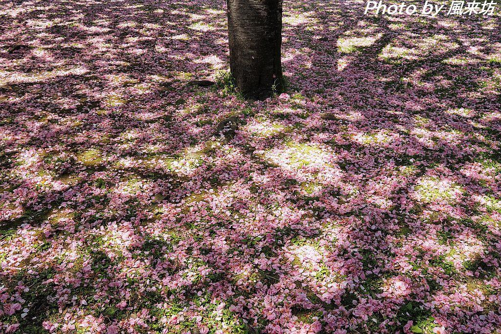 北の丸公園で花散歩_d0358854_20423127.jpg