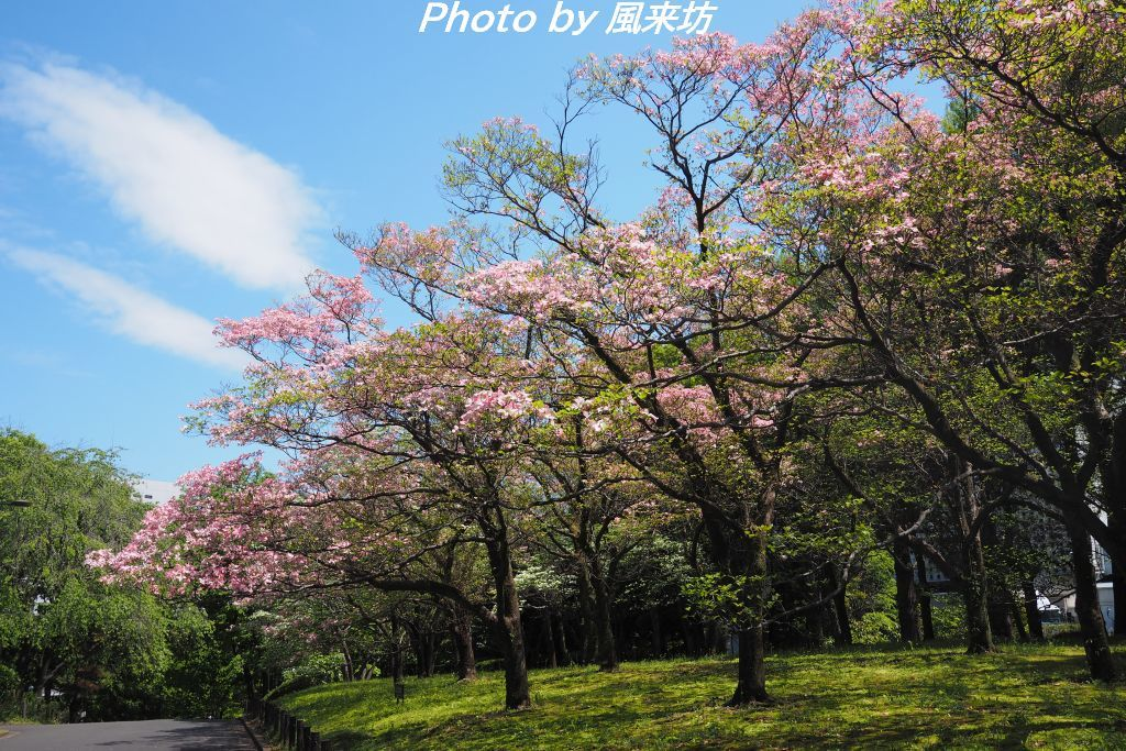 北の丸公園で花散歩_d0358854_20423391.jpg