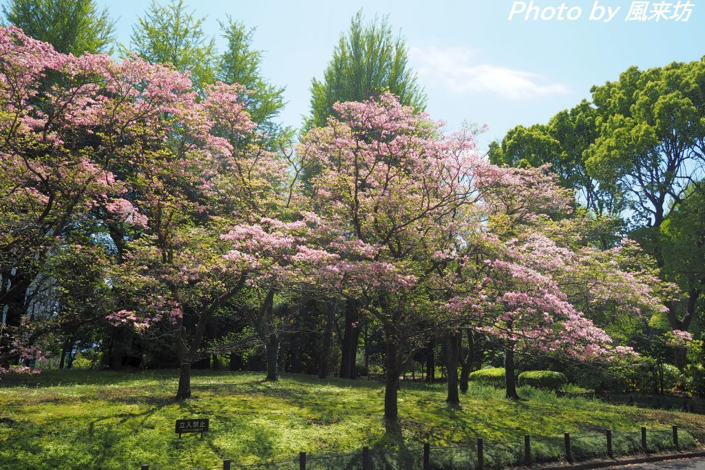 北の丸公園で花散歩_d0358854_20423624.jpg