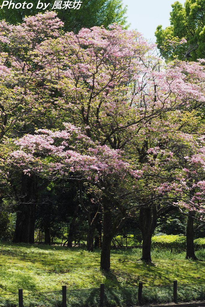 北の丸公園で花散歩_d0358854_20423878.jpg