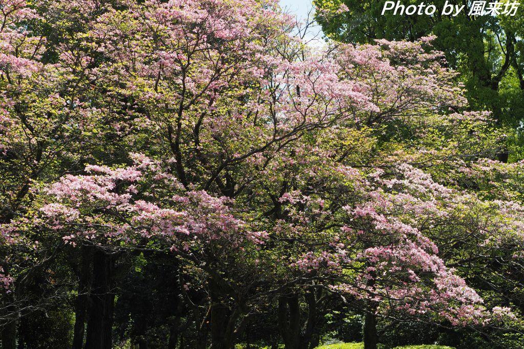 北の丸公園で花散歩_d0358854_20424156.jpg