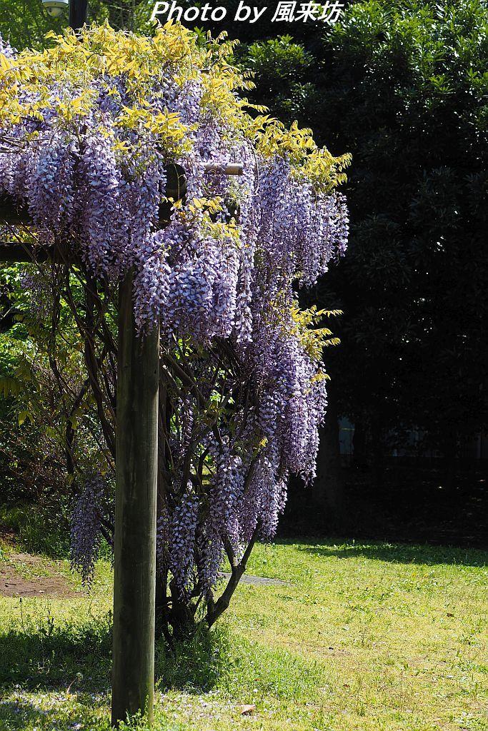 北の丸公園で花散歩_d0358854_20424735.jpg